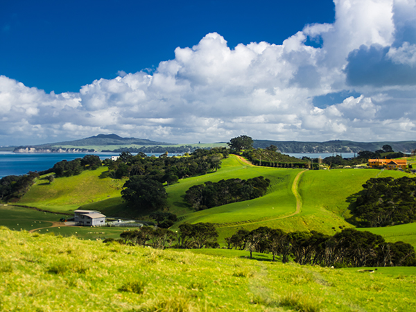 Waiheke Island Rolling Green Hills
