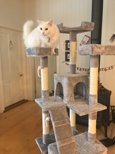 Maisey inspecting the newley assembled Cat Tower