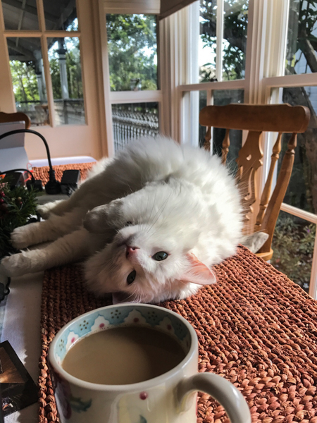 Maisey the cat and my morning coffee