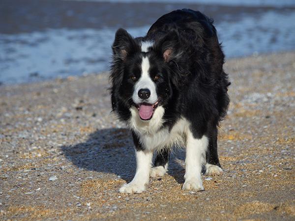 Solo on Beach