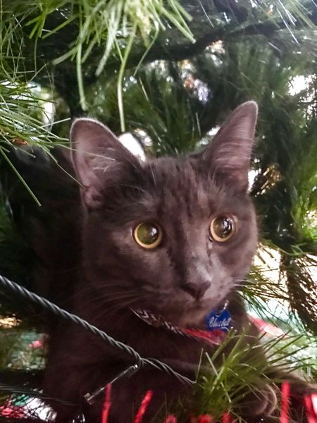 Bluebell the cat in the Christmas Tree