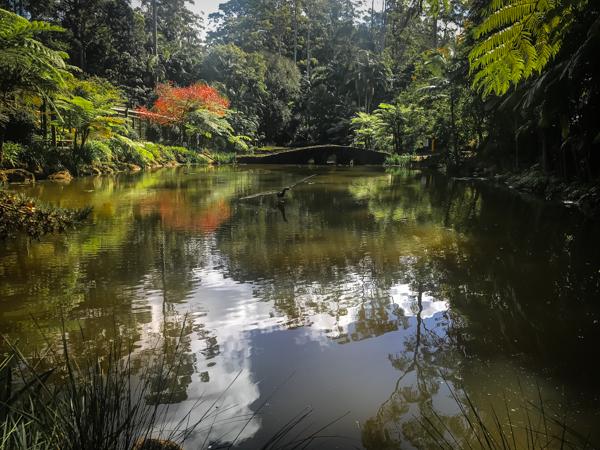 Mt_Tamborine Botanic gardens