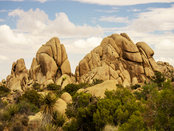 joshua tree national park rock formation